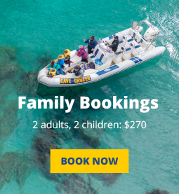 Family Bookings Button